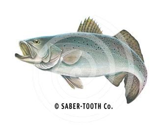 Sea Trout Fish Decal Sticker