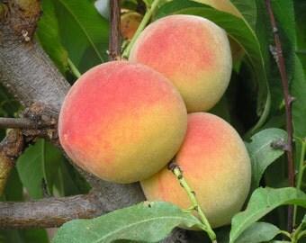 Organic Pioneer Peach Jam