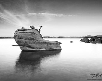 Black White Photo, Bonsai Rock in black white