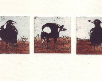 Original etching of three Australian Magpies
