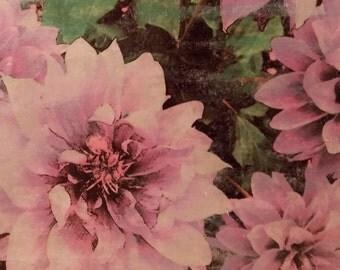 Colorful Floral Wall Art, Dahlia Lilac, Original Photo Transfer, [6 x 11]