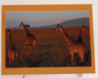 Giraffe Photo Cards, Blank Note card