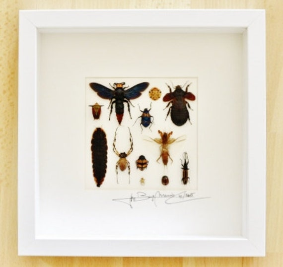 Artframe with real insects : Topquality display with mixed insects