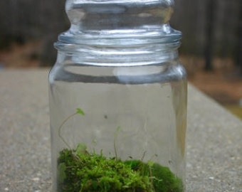 Moss Terrarium, Terrarium, Plant, Woodland, Green