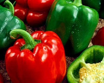 Organic  Sweet Pepper-California Wonder 300 TMR' vegetable seeds