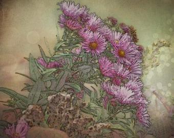 Pink Flowers, Fine Art Print