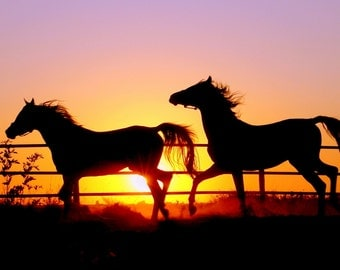 Horse Sunset Poster Print High Quality in Different Sizes
