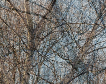 Greeting card, nature, branches of tree