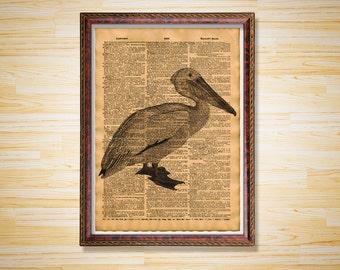 Antique decor Pelican print Bird poster