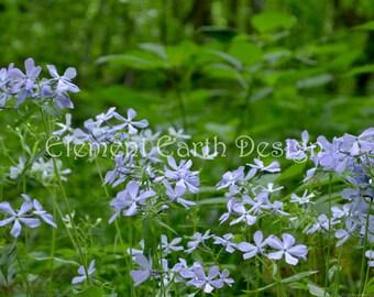 Lavender Flowers, Instant Download, 10x8, Digital Printable, Fine Art Digital Photo, Photography, in the woods, forest, woodland, landscape