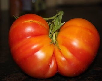 Big Rainbow Heirloom Tomato Seeds, Naturally Grown in the Pacific NW