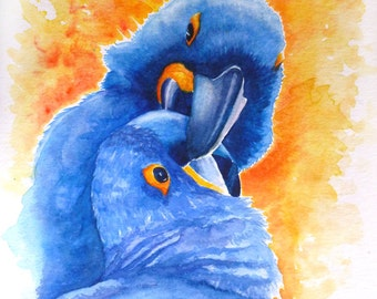 Watercolour painting of two blue hyacinth macaws