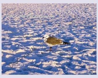 Nautical, Seagull, Coastal, Sunrise, Photo, Fine Art Photography, Prints, Digital Photo, Ocean, Bird, Sand, Beach, Trending, 8x10