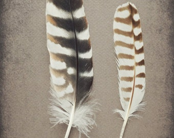 Feather Still Life Etsy