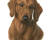 """DACHSHUND Red Smooth Dog Head on ONE 18"""" x 22"""" Fabric Panel to Sew"""