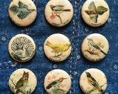 antique 1890s Whitehead & Hoag celluloid pinback | pick your favorite bird