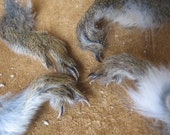 red squirrel feet - salt cured wild squirrel feet, respectfully harvested from a sustainable homestead (lot 9)
