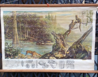 "Antique Paleo Pull Down Science School Chart ""Coal Forest"""