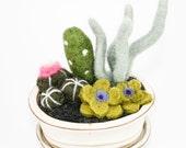Needle Felted Cactus Garden - Cream Colored Pot (Large)