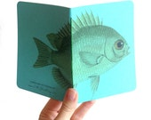 Little Fish Notebook - Small aqua blank book with nautical natural history illustration