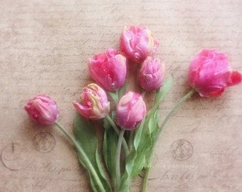 Tulip still life photograph,spring photo, Fine art  print, pink tulips, flower photography,shabby chic decor,french ephemera