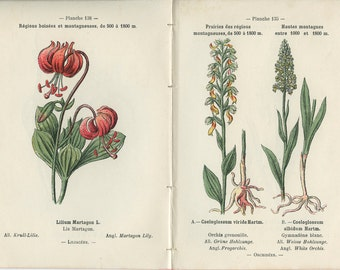 1898, White Orchid, Martagon Lily, Fragrant Orchid, Frog Orchid, French Botanical Book Plate, 135-138, 136-137, Henry Correvon