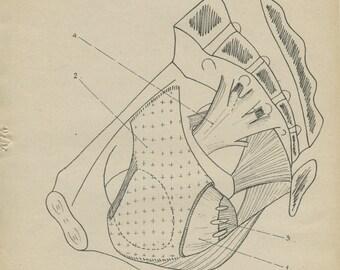 Human Anatomy Print 1947, Pelvis Wall Muscles, Vintage Medical Anatomy Art, Medical Diagram 5, Geek Art Print, Medical Student Gift