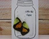 Real Butterfly wing earrings, Butterfly earrings, wings, insect jewelry, Bohemian Jewelry, BW124
