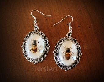 Bee Earrings - Real Honey Bee in Resin choice of copper brass or silver dangle earrings real insect taxidermy real bug in resin bee jewelry