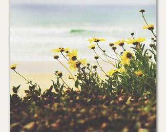 Yellow Flowers on the Beach - fine art photography print