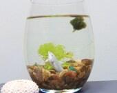 MARIMO WATER Terrarium, Choose Your Favorite Creature