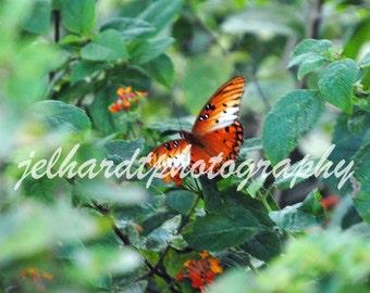 Fluttery By, Butterfly