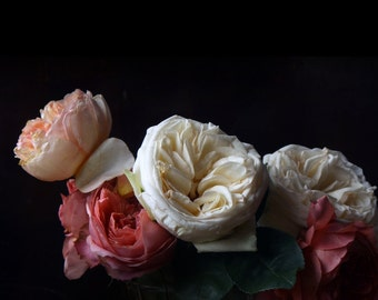 Large Photograph of Still Life with  Roses