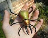 Mini GOURD beetle #10 Rainbow stag beetle