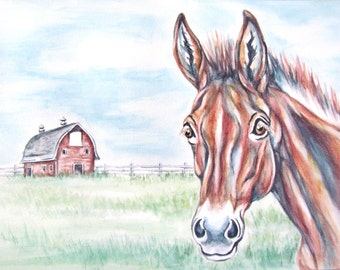 Huskers the Mule - book, children, mule, horses, little boy, birthday, present