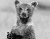 CUTE BABY BEAR Photo, Bla...