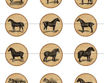 Horse Magnets, Horse Pins, Vintage Horse Pins, Vintage Horses, Fridge Magnets