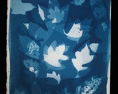 "Original Cyanotype Photogram of Leaves - 11.75"" x 15.25"""