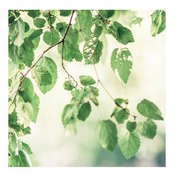 Summer Afternoon, Art, Photography, Fine Art Print, Summer leaves, Mint Green, Sunshine