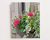 Geranium Art Print - Charleston South Carolina Photography - Flower Print - Window Box Photograph - Pink and Green Wall Art - Southern Decor