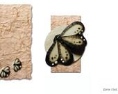 Butterfly, wood stud earrings, wooden earrings, butterfly earrings, wooden butterfly, wood earrings, wood burned jewelry, wood post earrings