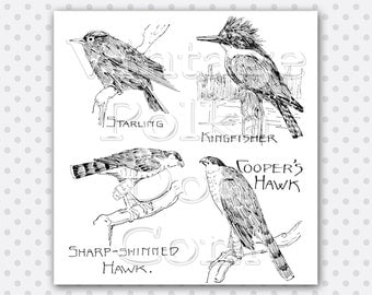 Clipart Printable Birds Nature Vintage Digital Collage Sheet Instant Download Scrapbooking