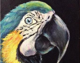 Parrot  Painting bird painting original art 5 x 7