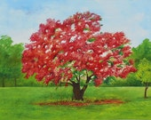 Royal Poinciana Tree Watercolor Painting