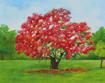 Royal Poinciana Tree Watercolor Painting