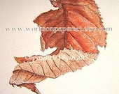Art Print - Fine Art - Woodland -- Fall - Autumn Leaf - Limited Edition Glicee Print from Original Watercolour and Pencil Drawing