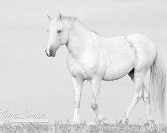 White Cloud - Fine Art Wild Horse Photograph - Wild Horse - Cloud - Black and White - Pryor Mountains - Fine Art Print