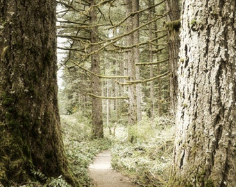 Woodland Photography Print 12x18 Fine Art Oregon Pacific Northwest Forest Wilderness Spring Landscape Photography Print.