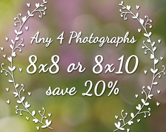 Buy 4 8x8 or 8x10 Prints and Save 20% - Create your own photo set, Fine Art Photography, Garden, Spring, Nature, Floral, 8x8, 8x10
