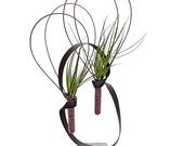 SOUL MATE terrarium- air plant terrarium, terrarium, plant gifts, gift